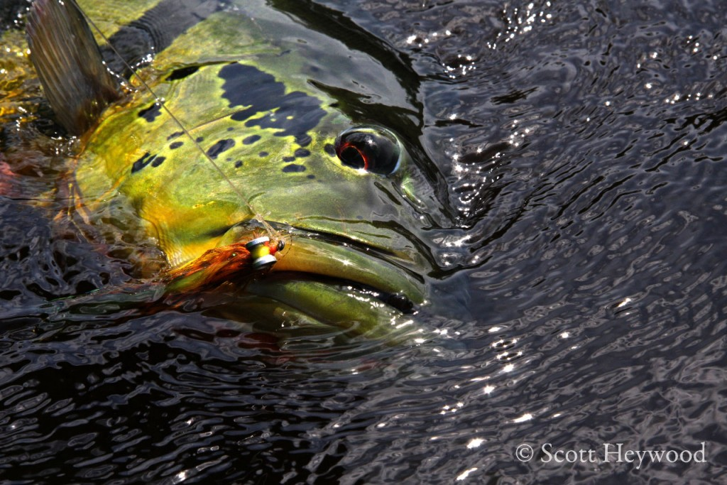 Agua boa lodge fly fishing gink and gasoline how to for Bass fly fishing