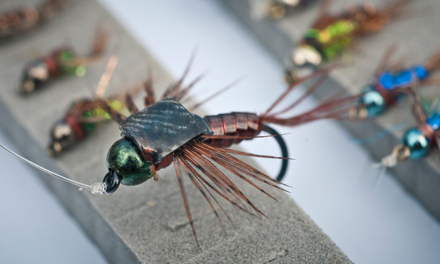 Flathead mayfly nymphs rule fly fishing gink and for Fly fishing nymphs