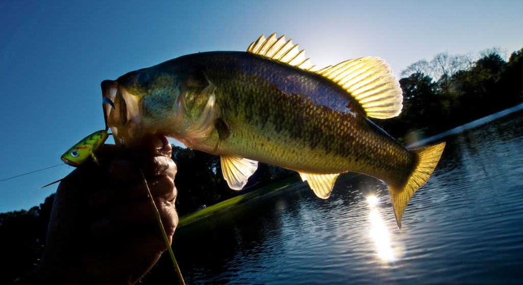 Fly fishing for bass fly fishing gink and gasoline for How to fly fish for bass
