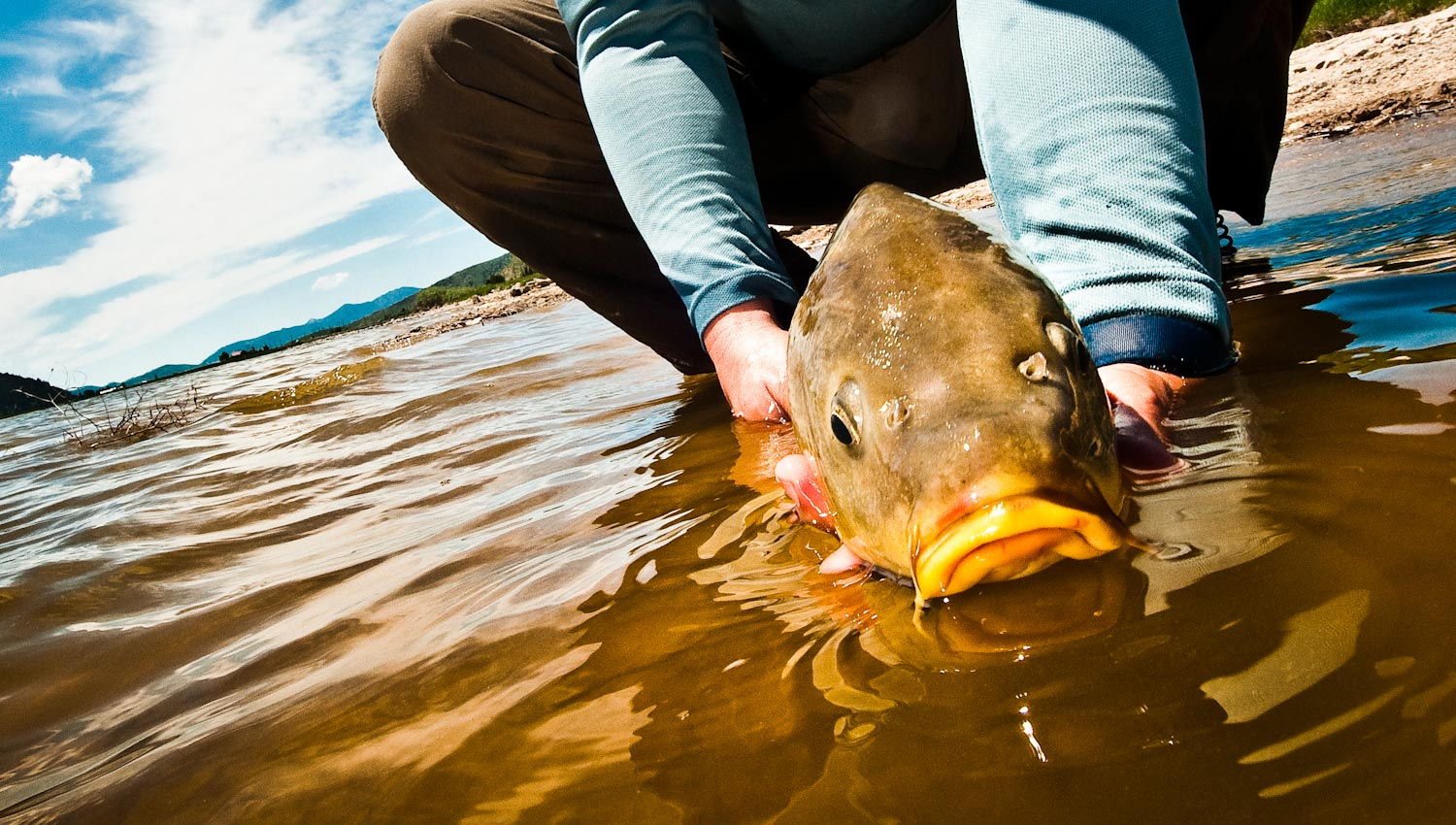 Sunday classic carp on the fly 12 q a 39 s to get you for Fly fishing carp