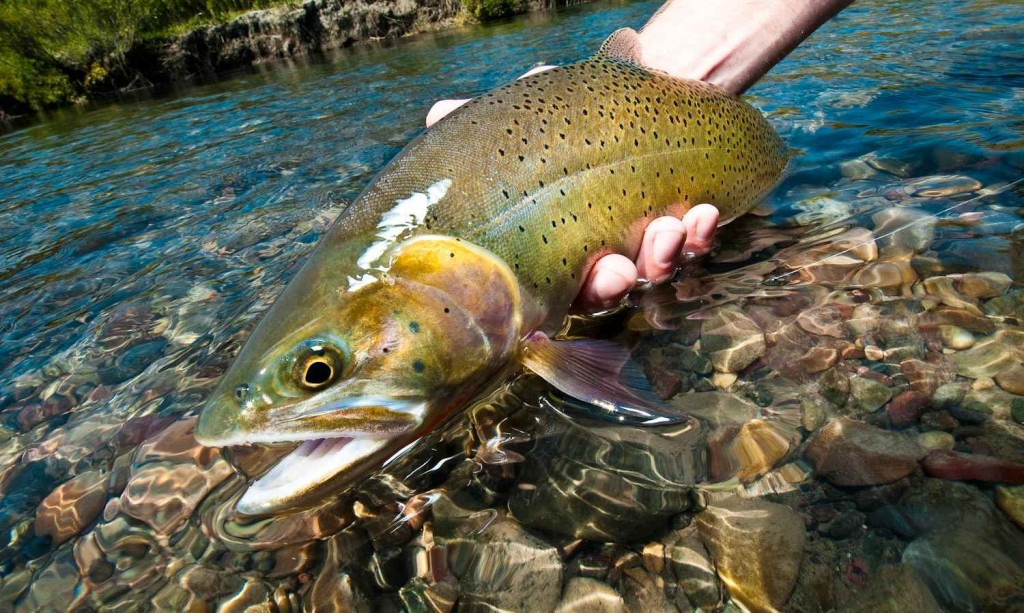 Sunday classic how to fly fish straight sections of for How to fish for trout in a river