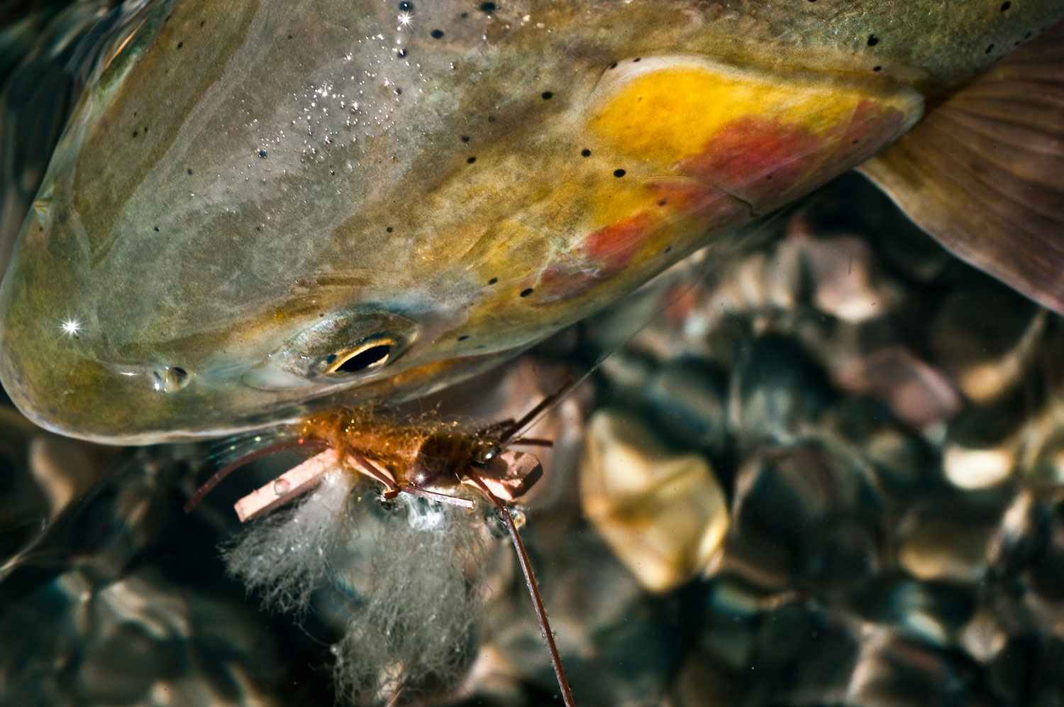 Sunday classic it only takes one good day of fly fishing for Wyoming fly fishing