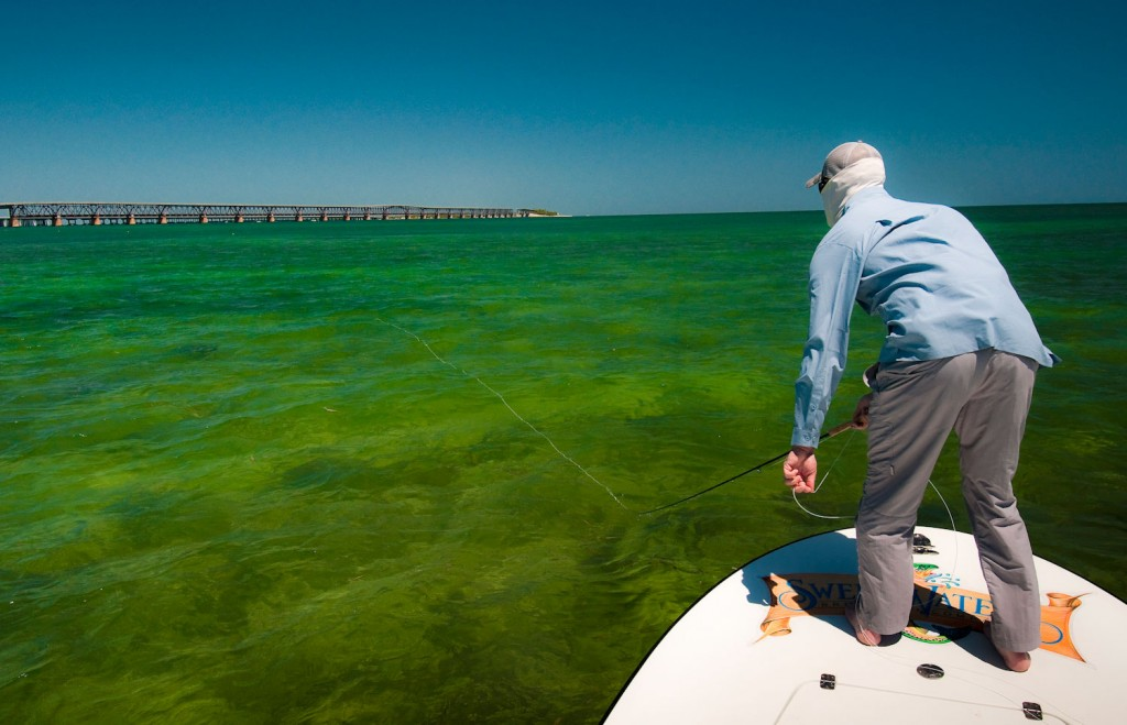 Presenting your fly to migrating tarpon fly fishing for Fly fishing for tarpon