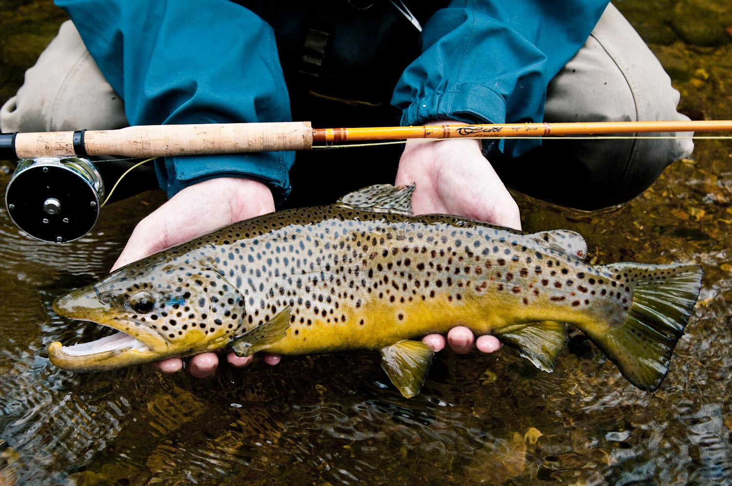 Fly Fishing Trout Flies  Dry Flies