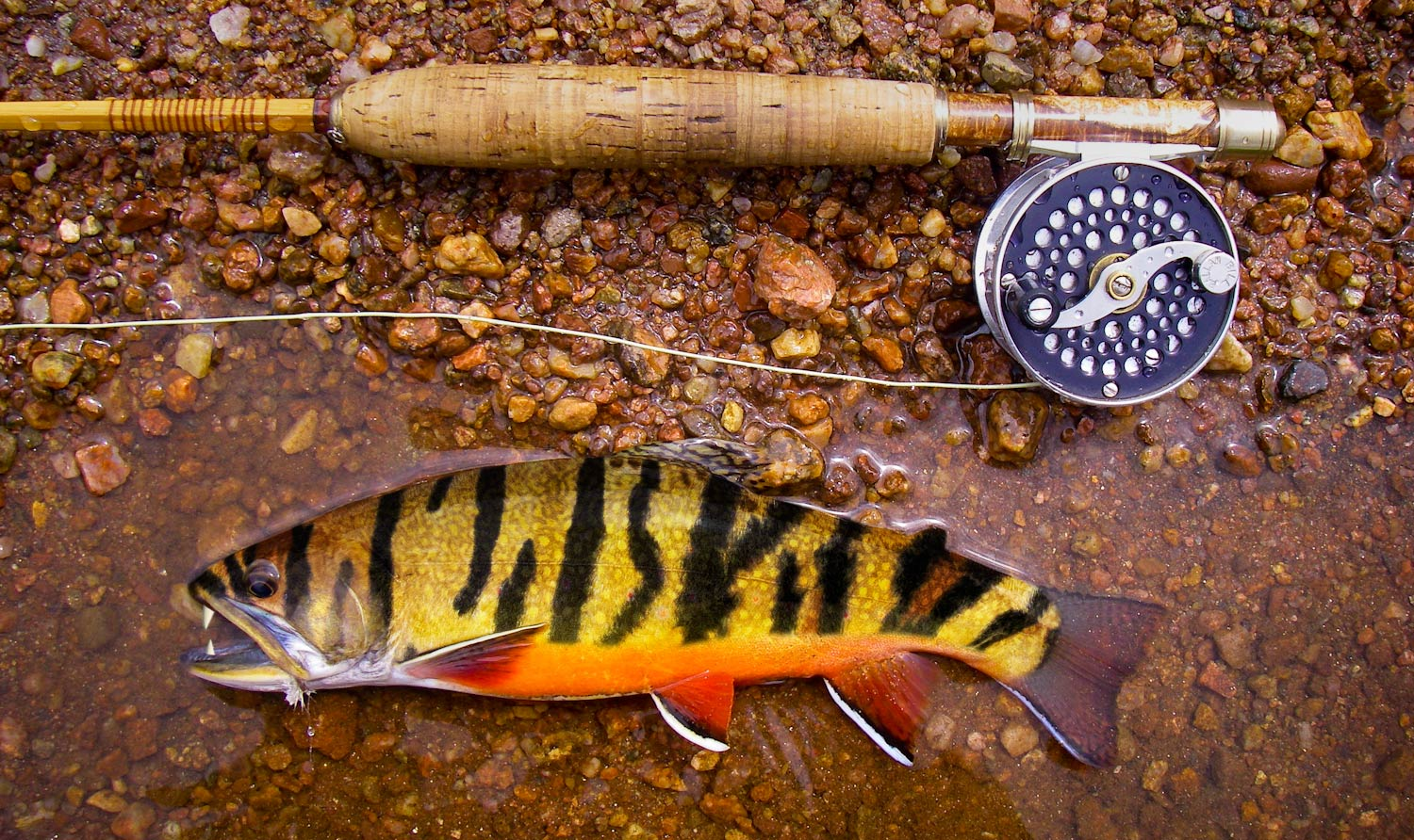 Tiger Trout | Fly Fishing | Gink and Gasoline
