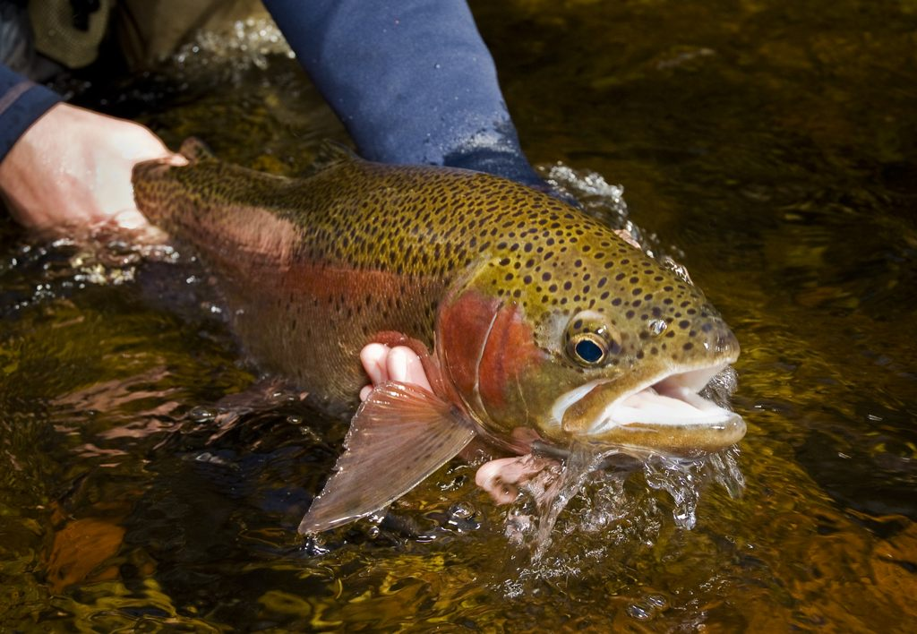 sunday classic / listen to the fish | fly fishing | gink and, Fly Fishing Bait