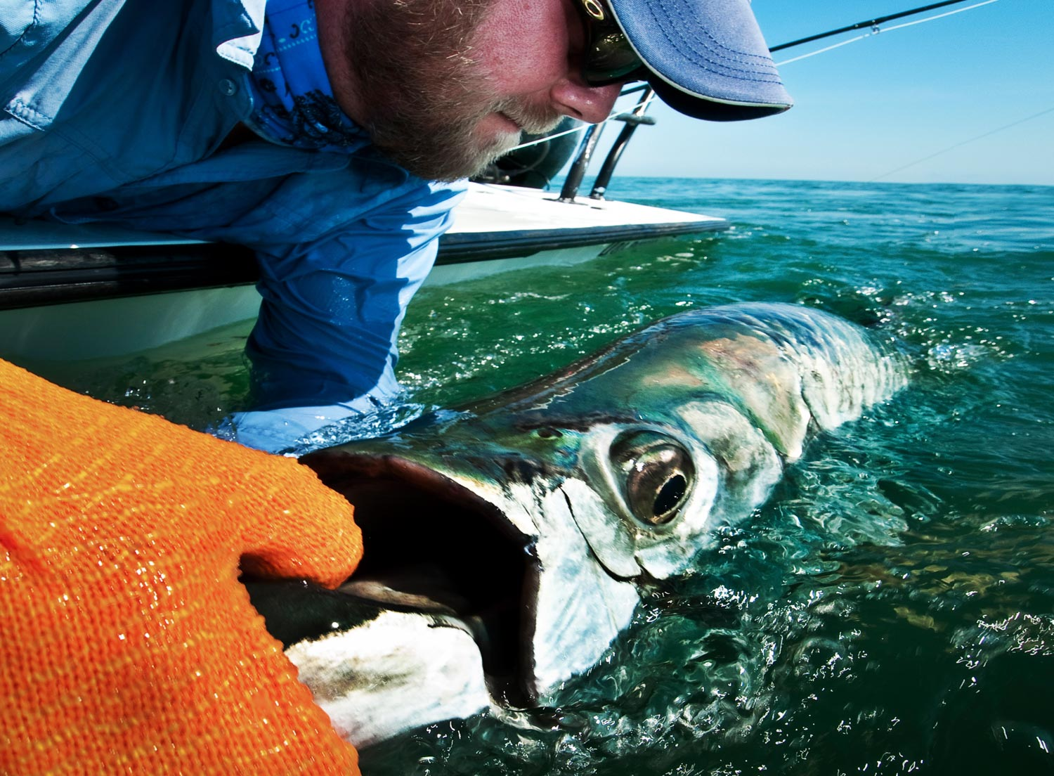 Early season tarpon alert fly fishing gink and for Fly fishing for tarpon