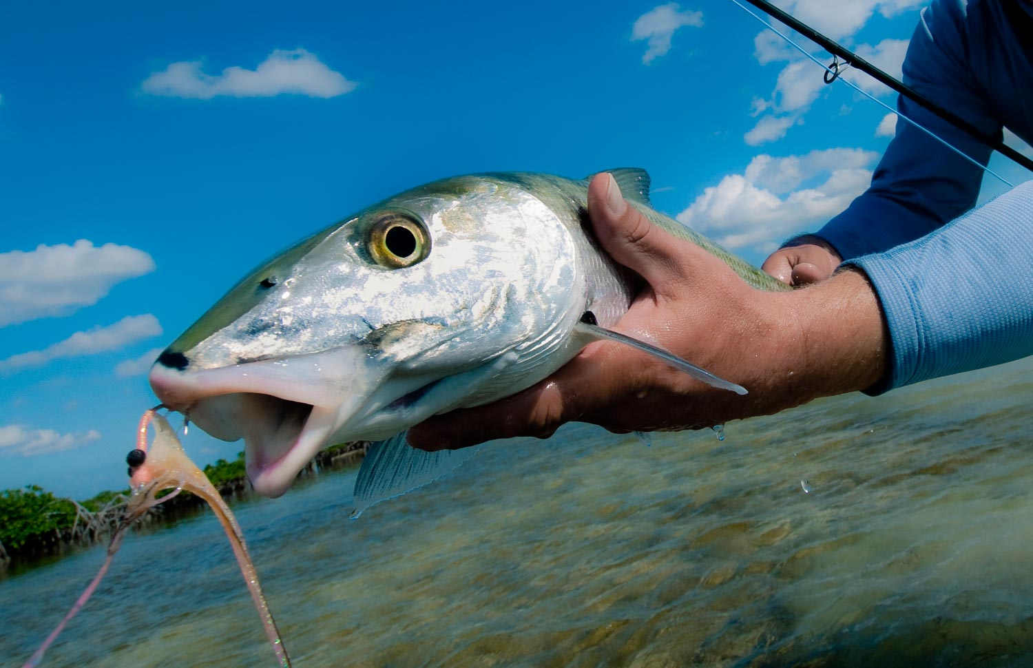 Diy bahamas bonefish with the family fly fishing gink and got cha photo by louis cahill solutioingenieria Images