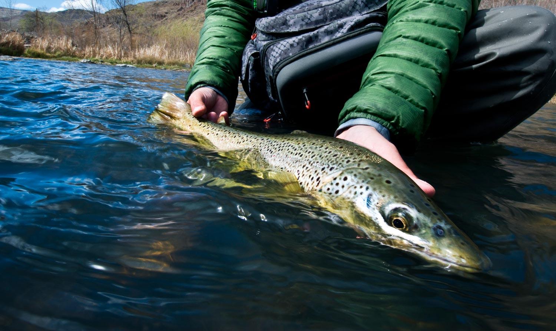 owyhee-brown-trout