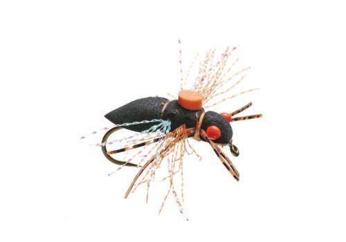 periodic-cicada