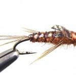 thin-skin-mayfly