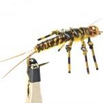 thin-skin-stonefly