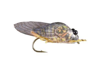 true-cicada