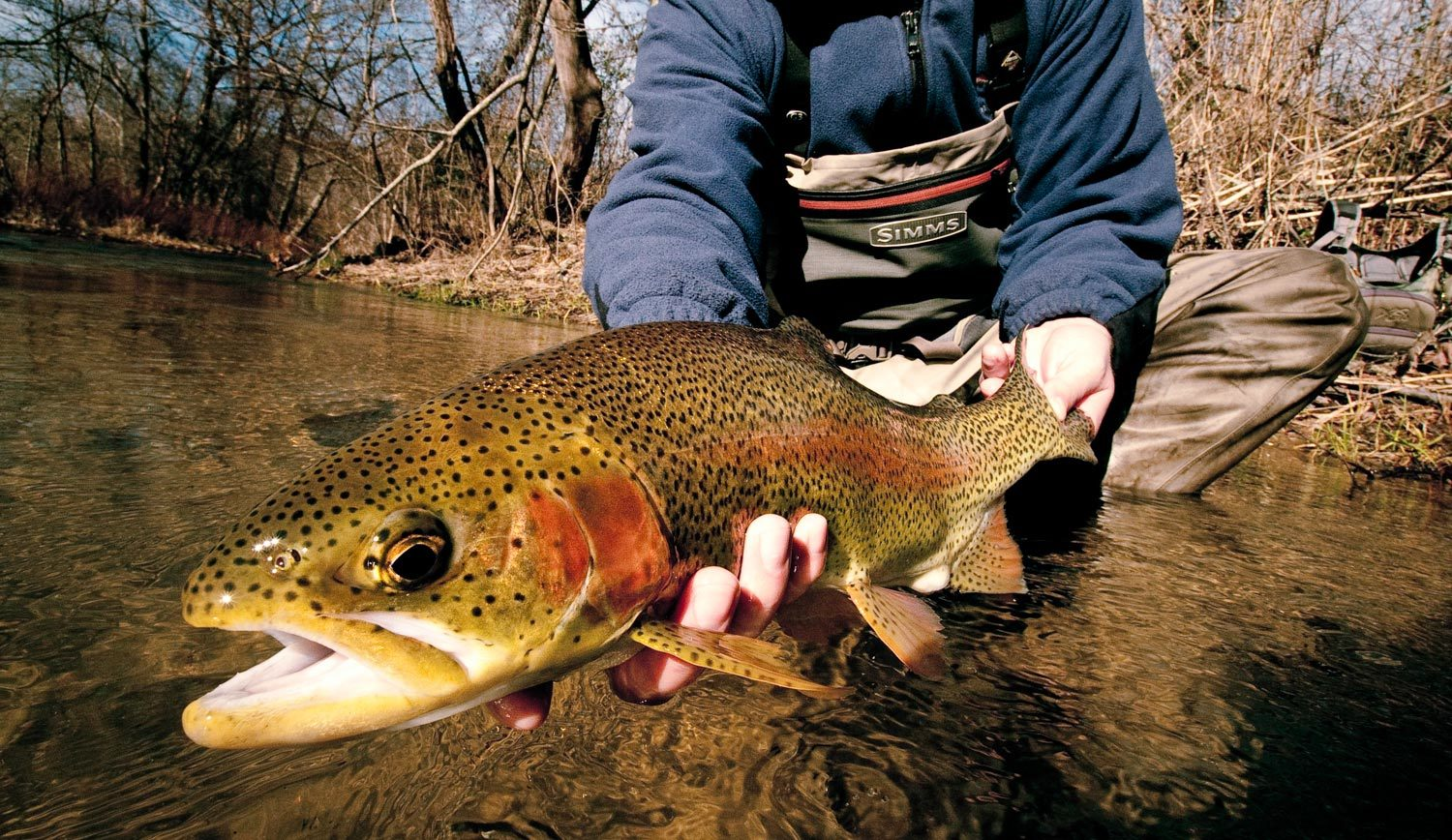 fly fishing: don't overlook the trout water close to you | fly, Fly Fishing Bait