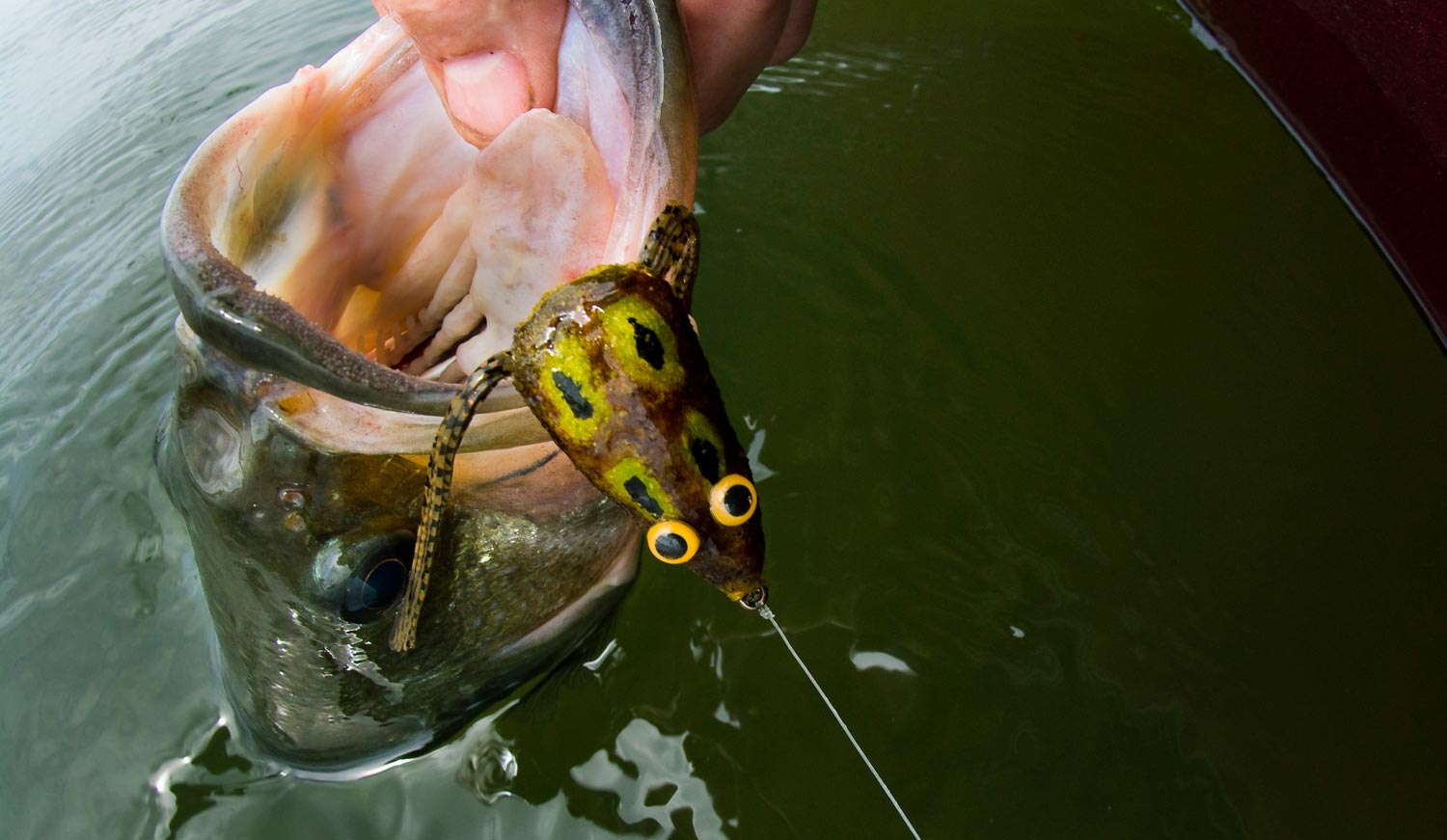 fly fishing 5 tips for fishing frog patterns around grass