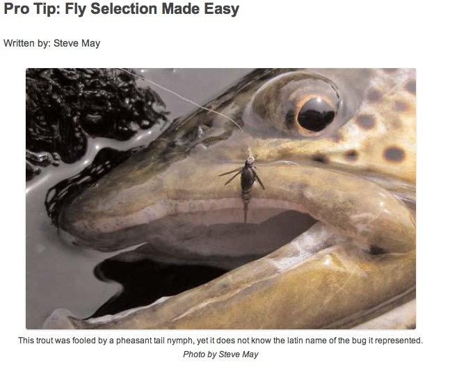 fly-selection-for-trout