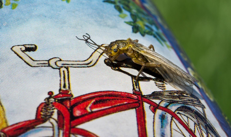 yellow-sally-fly-pattern