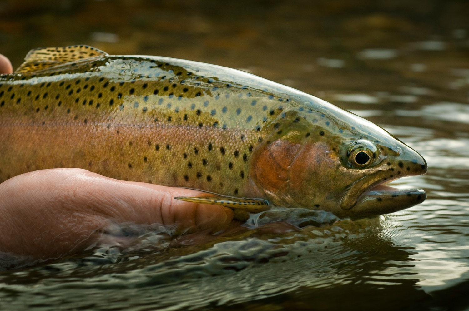 6 Easy Tips to Help Fly Anglers Catch Educated Trout