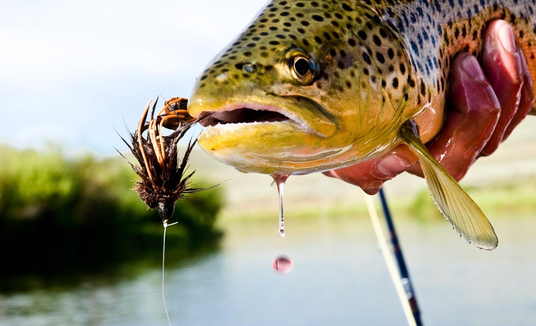 streamer-fishing