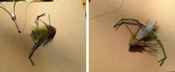 andreas-frog