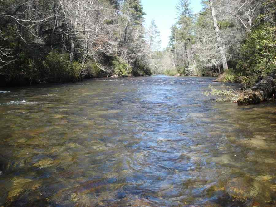 ga-trout-water