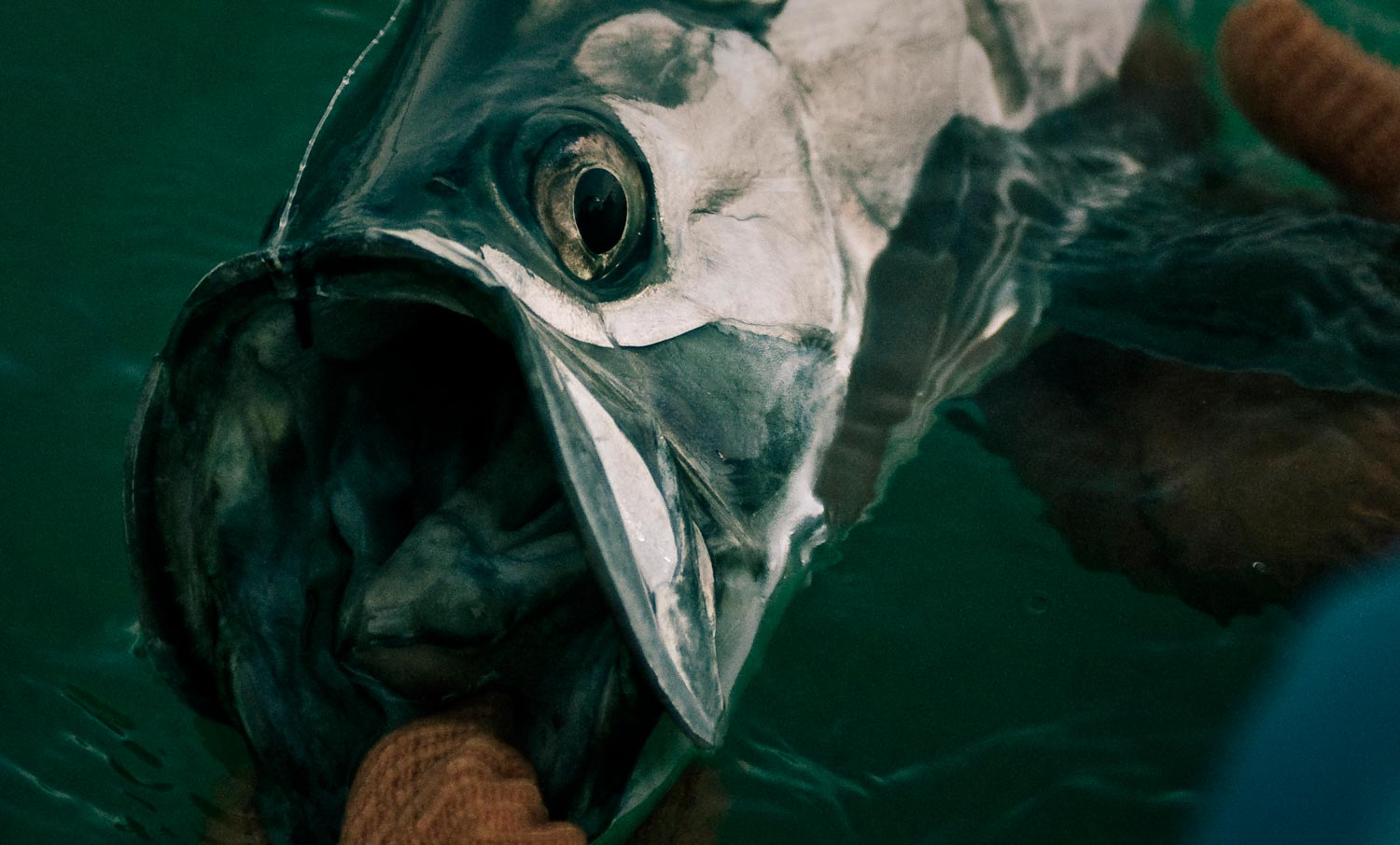 11 Tips for Spotting Tarpon | Fly Fishing | Gink and Gasoline | How ...