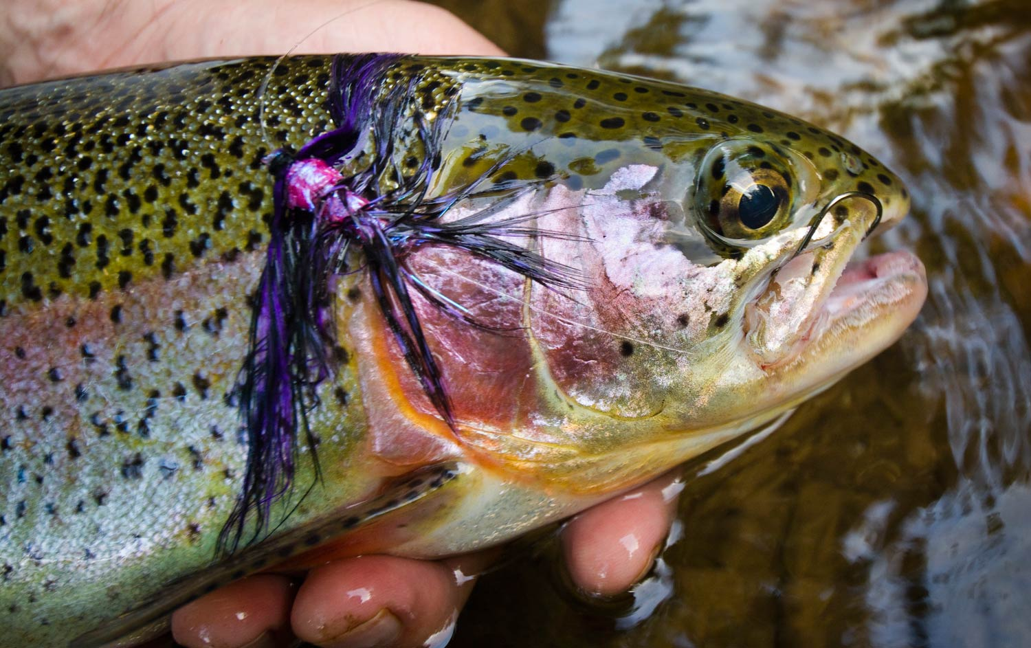 Swinging steelhead flies for trout fly fishing gink for Lot of fish