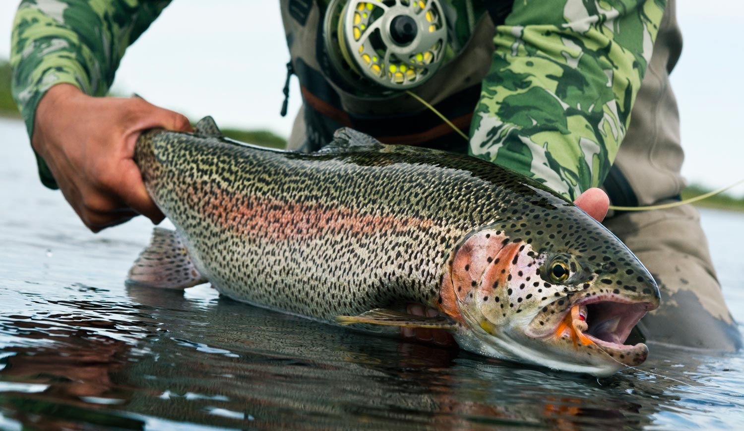 Flies That Catch Big Trout, The Truth Might Surprise You ...