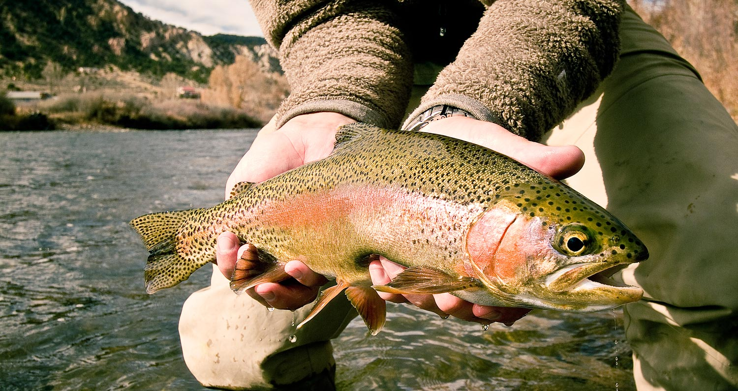 Fly fishing trout tips driverlayer search engine for Trout fishing techniques