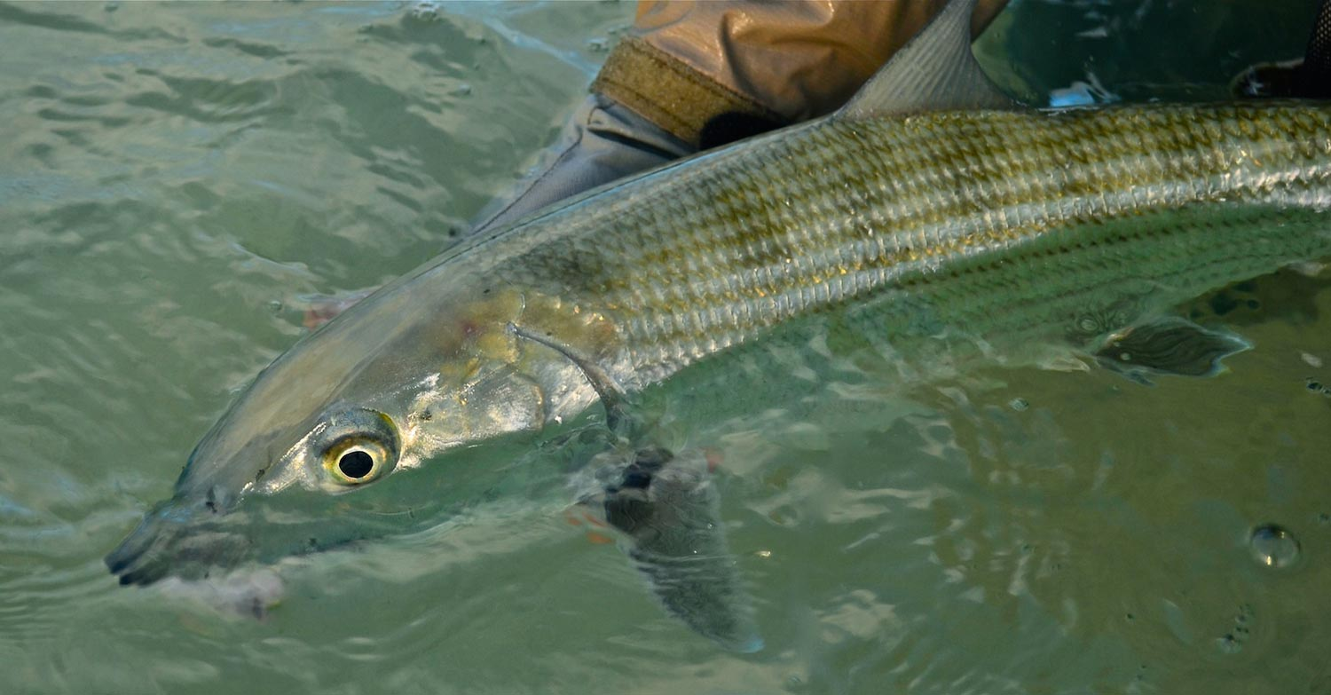 Strategies for diy bonefishing fly fishing gink and gasoline photos by rod hamilton solutioingenieria Image collections