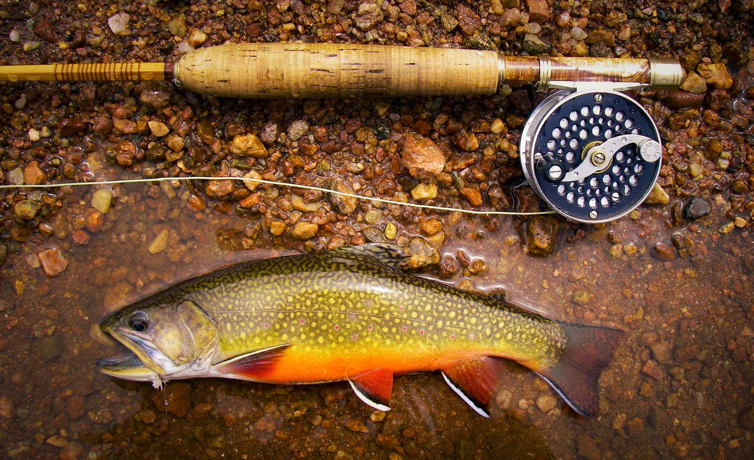 Brook trout fly fishing gink and gasoline how to fly for Trout fishing in ga