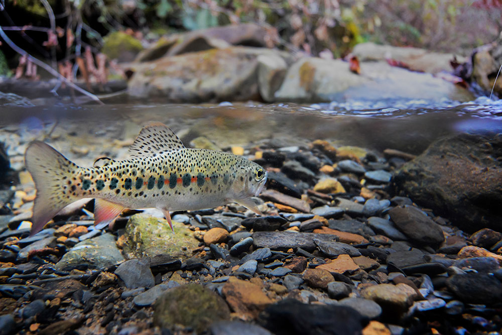 Fly Fishing Photography Of The 2015 G G Fly Fishing Photography Contest Begins Now