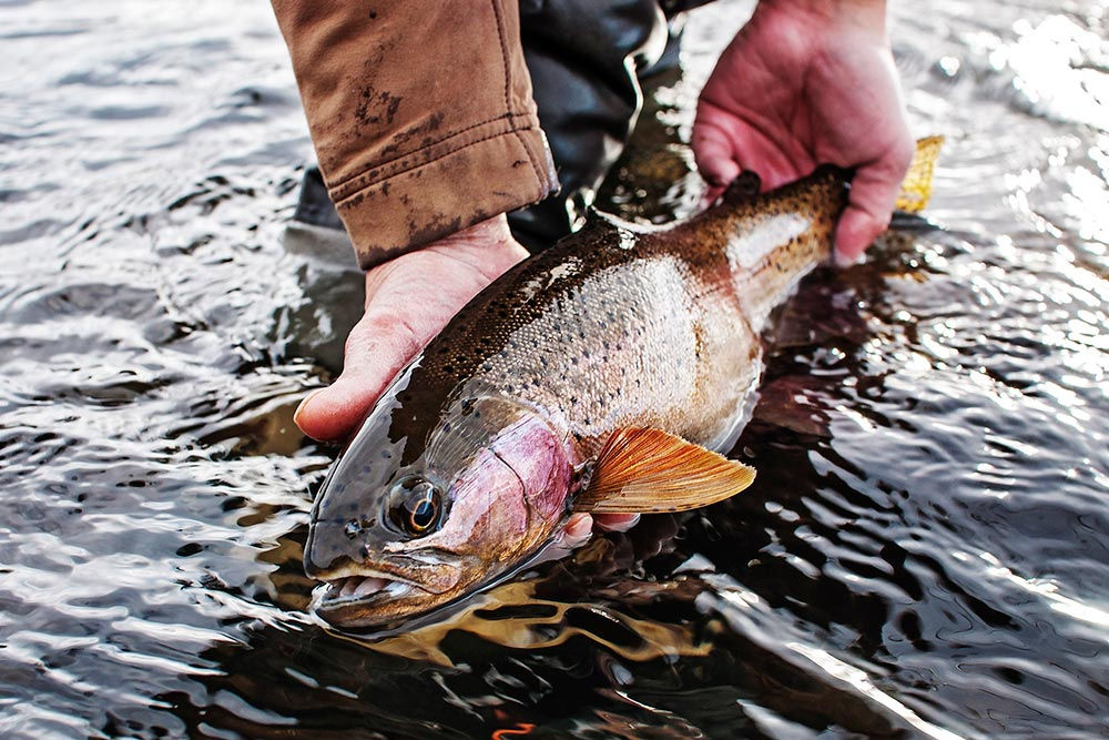 2015 g g fly fishing photography contest winners fly for Fly fishing competitions