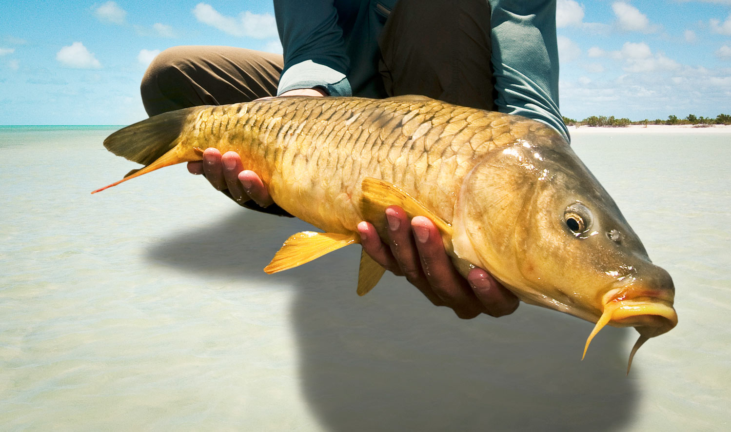Carp on the flats Photo by Louis Cahill