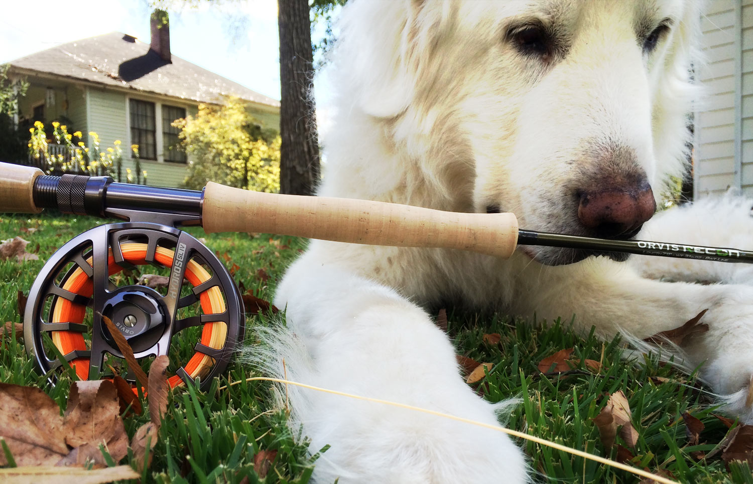 Improve Your Casting With A Dog | Fly Fishing
