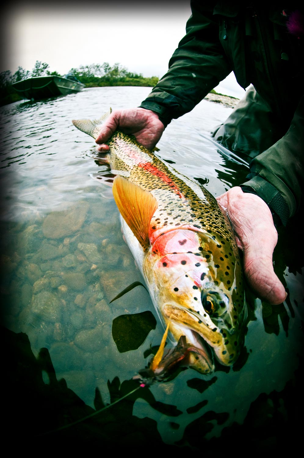The pebble mine fight is far from over fly fishing for How to fish for rainbow trout