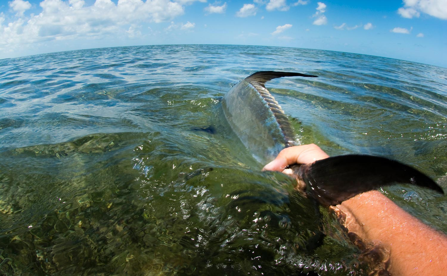 Bahamas permit fishing fly fishing gink and gasoline for Fly fishing bahamas