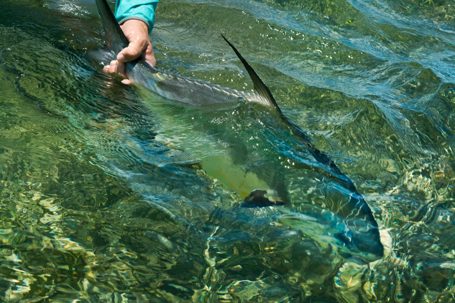 A first look at abaco bahamas fly fishing gink and for Fly fishing bahamas