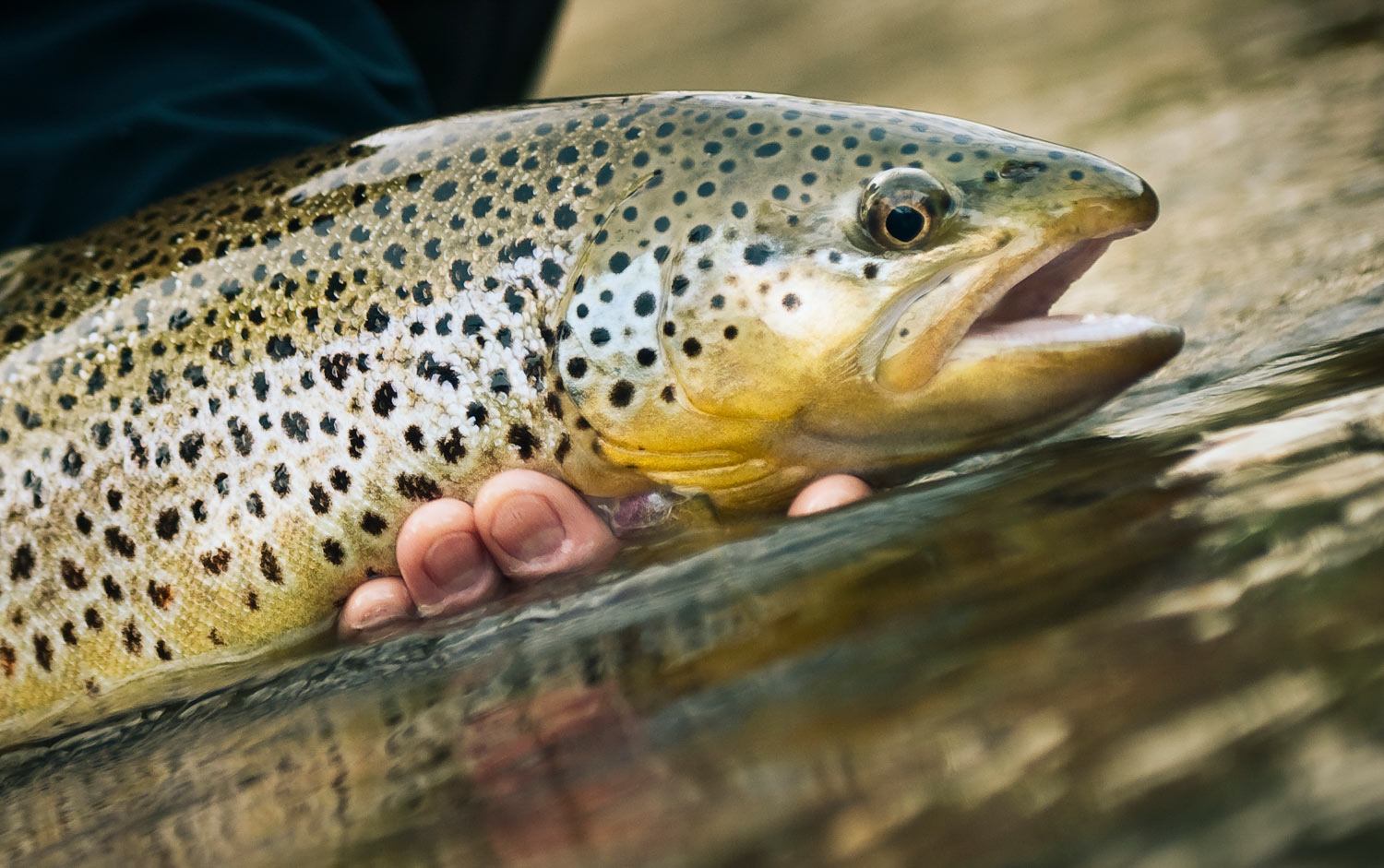 How To Hold Fish For A Photo: Video | Fly Fishing | Gink ...