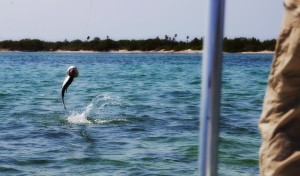 Copy-of-0028-Tarpon-3