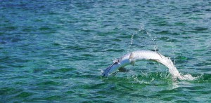 Copy-of-030-Tarpon-4