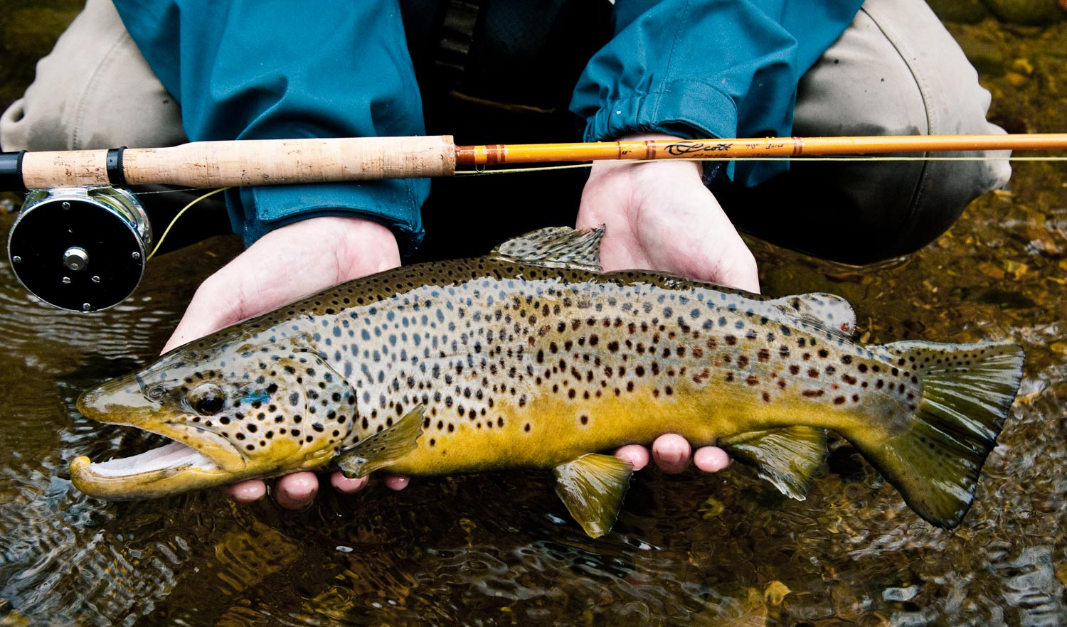 A nice brown on the Scott F2 fiberglass. Photo by Louis Cahill